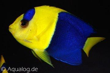 Vissen en lagere dieren