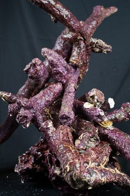 Real Reef Rock - Branched box 16 kg