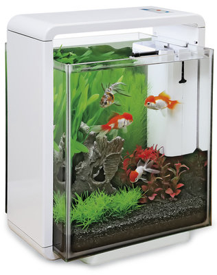 SF HOME 25XL AQUARIUM WIT