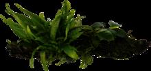 HOUT ( large ) MET 3 SOORTEN PLANTEN